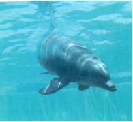 Aquamarine Dolphins
