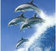 Dolphin White Wave Healing