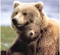 Bear Empowerment