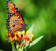 Butterfly Reiki Healing