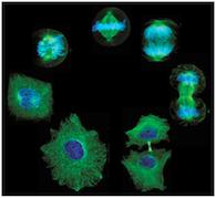 Cells Grow Optimizer