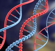 DNA 4 Success