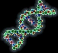 DNA Lights Reiki