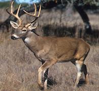 Deer Empowerment