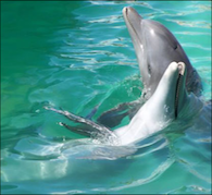 Dolphin Elixir 2013
