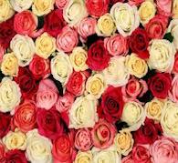 Healing Rose Reiki