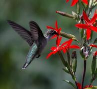 Hummingbird Empowerment
