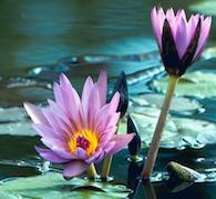 Lotus Body Vibration