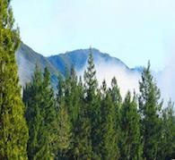 Magick & Abundance of the Pine and Cedar